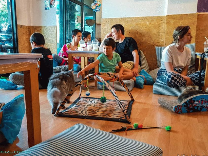 Cafe Cat's Catmosphere v Chiang Mai