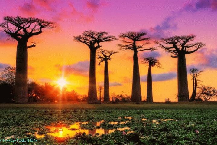 Madagaskar, Baobab Alley